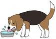 水飲み犬-小