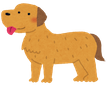 dog_golden_retriever1