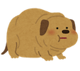 pet_fat_dog1
