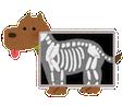 pet_xray_dog1