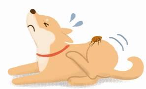 犬②(ノミ)