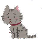 pet_cat_hungry