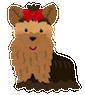 dog_yorkshire_terrier1