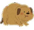 pet_fat_dog1